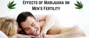 Effects of Marijuana on Men's Fertility