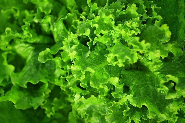 leafy greens for health