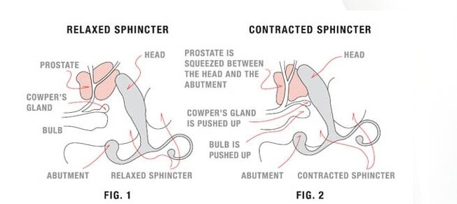 How Prostate massage works